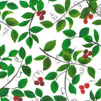 Holly Berries Gift Wrap - FREE FREIGHT